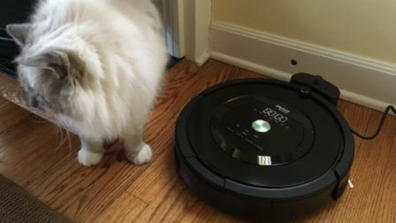 Groovy Irobot Roomba 805 Product Review Download Free Architecture Designs Scobabritishbridgeorg