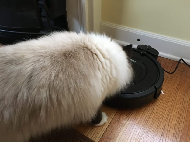 Best Robot Vacuum Cat Hair - iRobot Roomba 880 Review - Roomba for Pets Costco - Floppycats 2