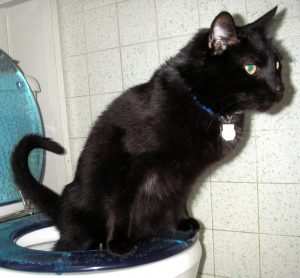 Toilet_Trained_Cat_13_Aug_2005