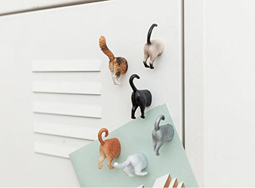 Cat Butt Magnets on wall
