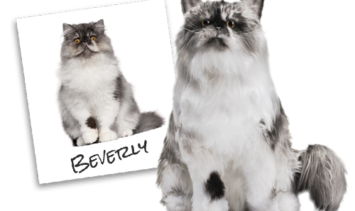 Cuddle Clones Coupon Code Floppycats Giveaway
