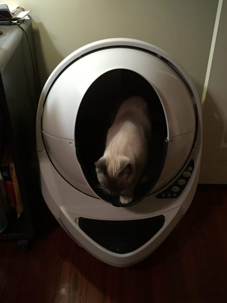 Litter Robot Open Air Review Siamese Kitten Tom Selleck Experience 1