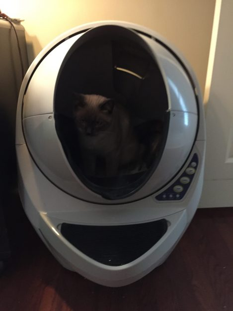 Litter Robot Open Air Review Siamese Kitten Tom Selleck Experience 2