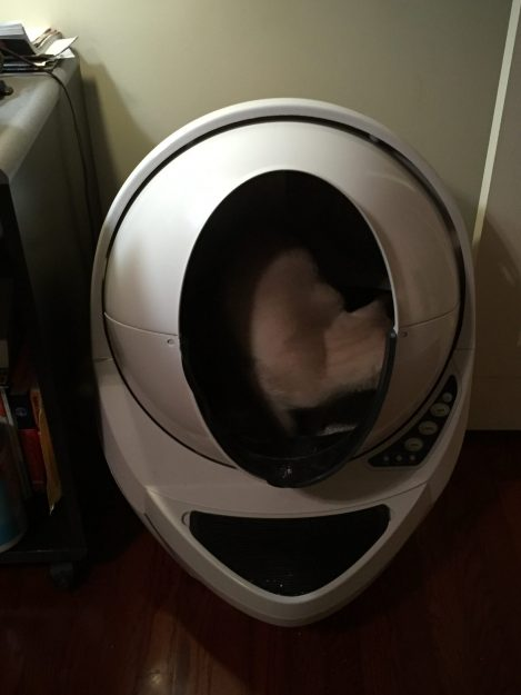 Litter Robot Open Air Review Siamese Kitten Tom Selleck Experience