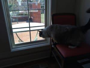WooPet Window Bird Feeder Product Review IMG_4071