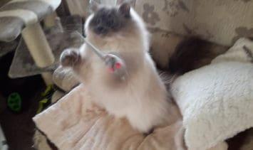 Bird Catcher PRO Plus Cat Feather Wand Toy 4