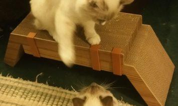 KATRIS Lynks Cardboard Cat Scratcher Giveaway Winner