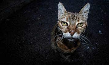 old-cat-1390365_960_720