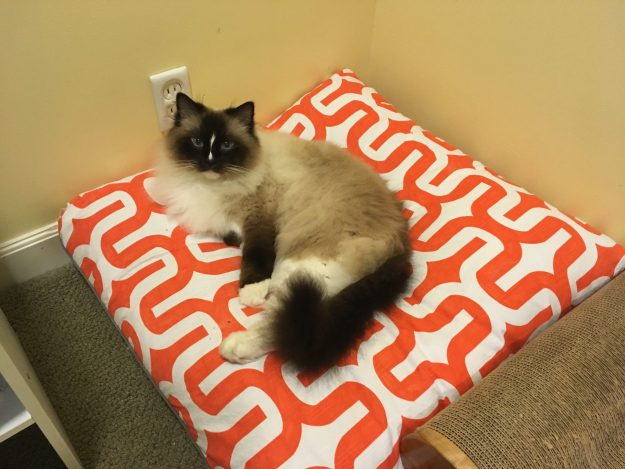 Ragdoll Cat Charlie sleeping overnight on Peach Pet Provisions Pet Pillow Bed