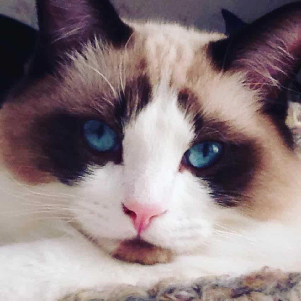 Blue Seal Cat Food Reviews