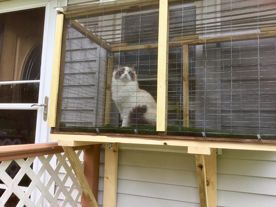 A Catio For Ragdoll Cats Leo And Shelby