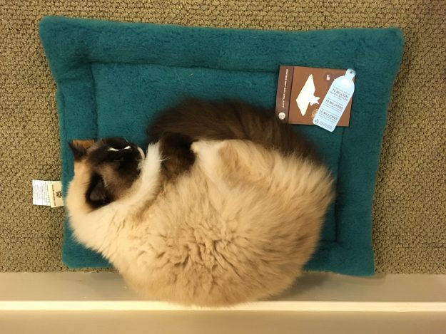 West Paw Design Montana Nap Pet Bed Product Review IMG_5678
