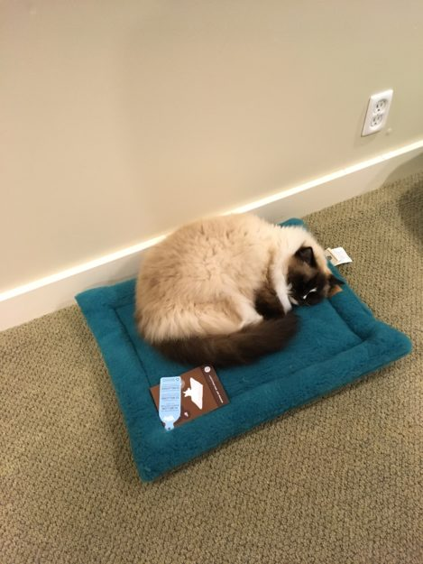 West Paw Design Montana Nap Pet Bed Product Review IMG_5680