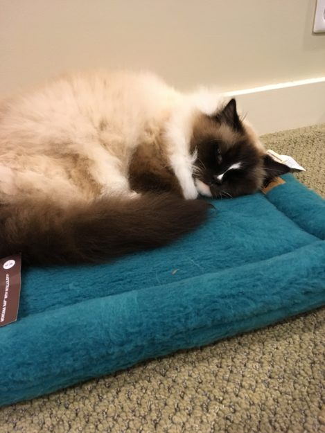 West Paw Design Montana Nap Pet Bed Product Review IMG_5681