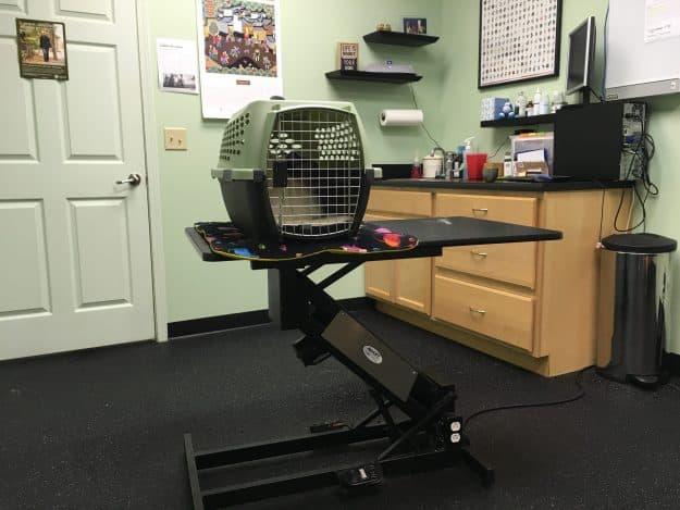 vet visit pet carrier IMG_7456