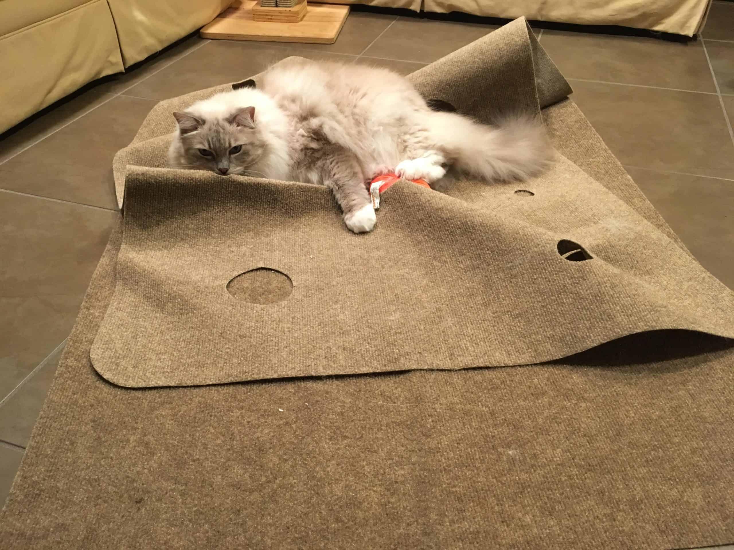Ripple Rug Cat Activity Mat Product Review Endless Fun