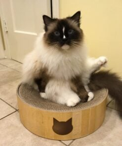 Necoichi Cat Cozy Scratcher Bed Bowl Unboxing Arrival Video for Product Review - Floppycats IMG_9087