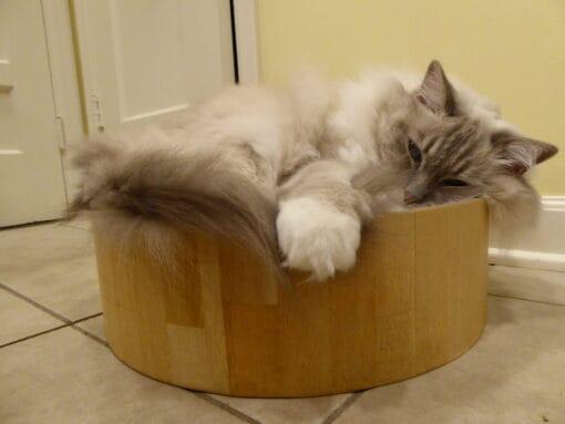 Necoichi Cat Cozy Scratcher Bowl Product Review
