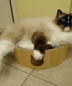 Necoichi Cat Cozy Scratcher Bowl Product Review P1010254