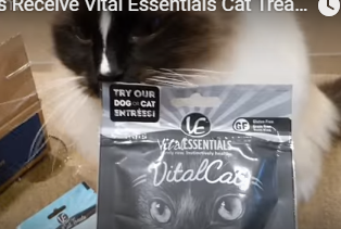 Ragdoll Cats Receive Vital Essentials Cat Treats from Chewycom and Cat Amazing Puzzle Toy