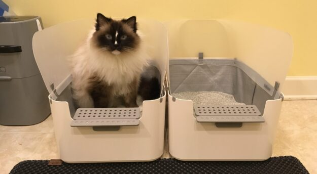 Modkat Open Tray Litter Box Product Review Reduce Litter
