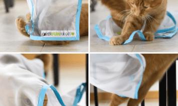 Sheer Fun for Cats Orange Tabby