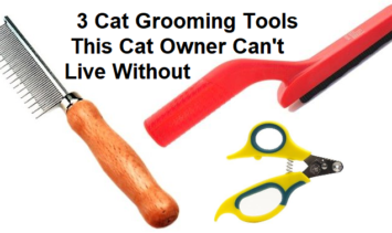3 Cat Grooming Tools This Cat Owner Can't Live Without