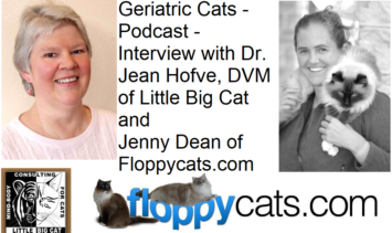 Geriatric Cats - Podcast - Interview with Dr Jean Hofve DVM of Little Big Cat and Jenny Dean Floppycats