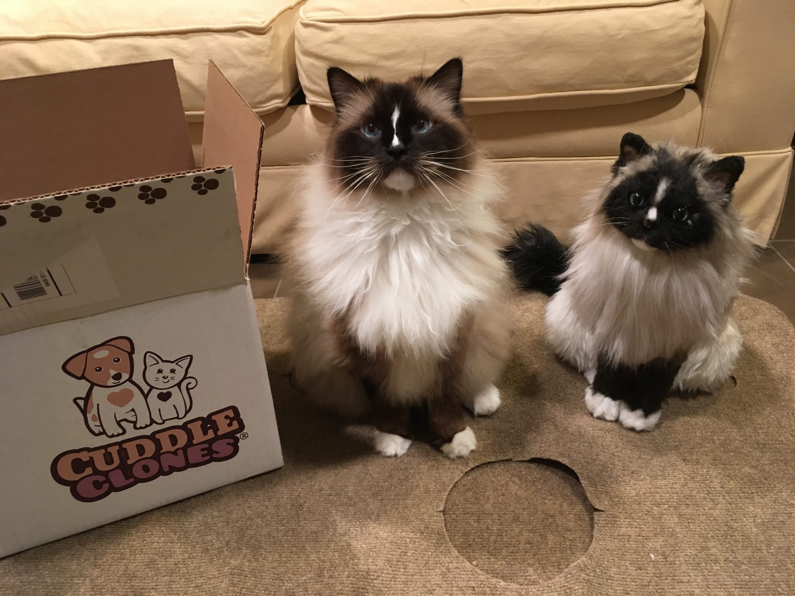 Cuddle Clones Cat Product Review Custom Stuffed Animals Of Pets