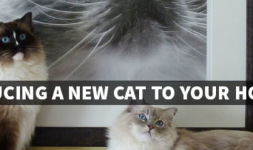 Introducing a New Cat to Your Home