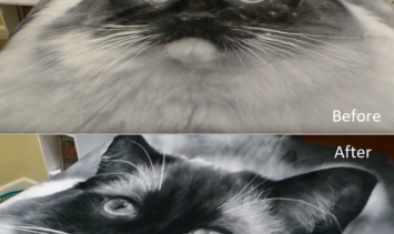 Lilly Brush BFF Caymus Blanket Before and After