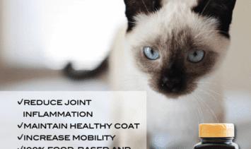 Moxxor-SocialMedia2_Pets-Cat-Instagram