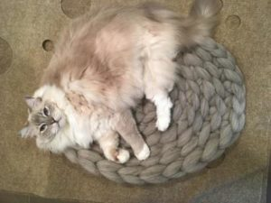 Super Chunky Crochet Cat Mat - Chunky Crochet Oval Cat Bed Unboxing for a Product Review