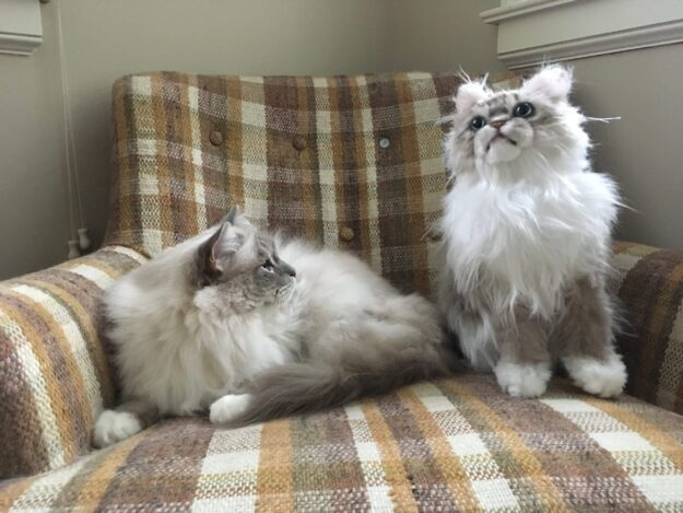 Cuddle Clones Coupon Code FLOPPYCATS10 Ragdoll Cat Trigg Chiggy IMG_4782