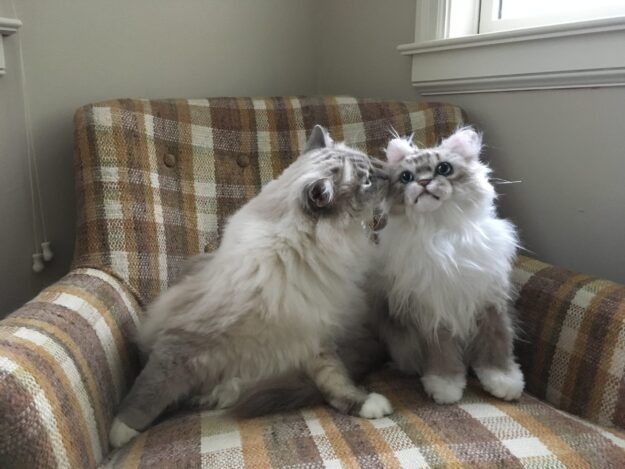 Cuddle Clones Coupon Code FLOPPYCATS10 Ragdoll Cat Trigg Chiggy IMG_4784