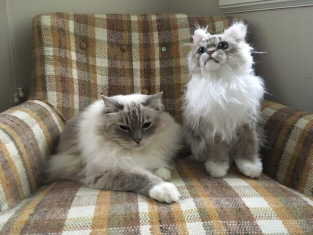 Cuddle Clones Coupon Code FLOPPYCATS10 Ragdoll Cat Trigg Chiggy IMG_4788