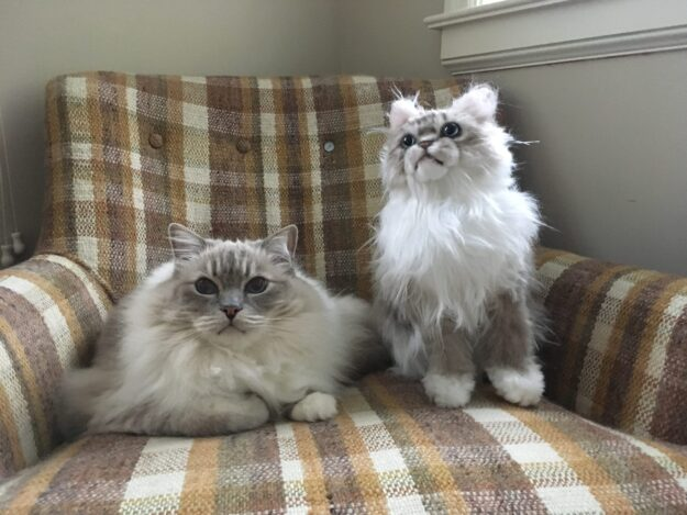 Cuddle Clones Coupon Code FLOPPYCATS10 Ragdoll Cat Trigg Chiggy IMG_4793