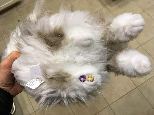 Cuddle Clones Coupon Code FLOPPYCATS10 Ragdoll Cat Trigg Chiggy IMG_4798