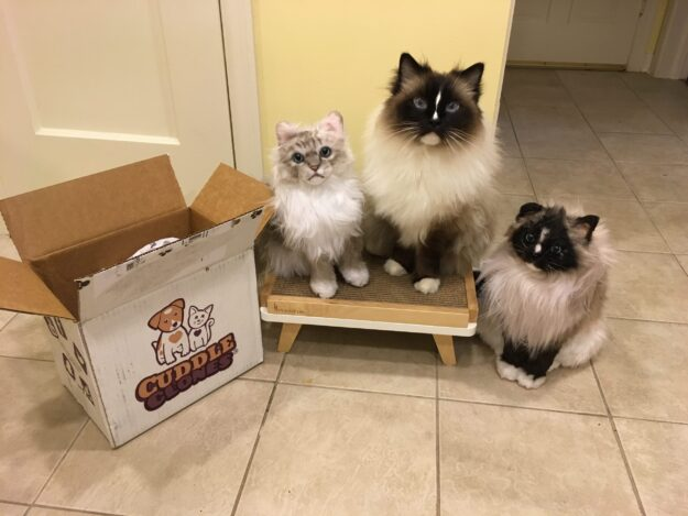 Cuddle Clones Custom Pet Stuffed Animal Product Review - Chiggy IMG_4739