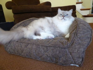 Non-Toxic Memory Foam Pet Bed - Brentwood Home Runyon Bed Unboxing Video - Floppycats P1010954