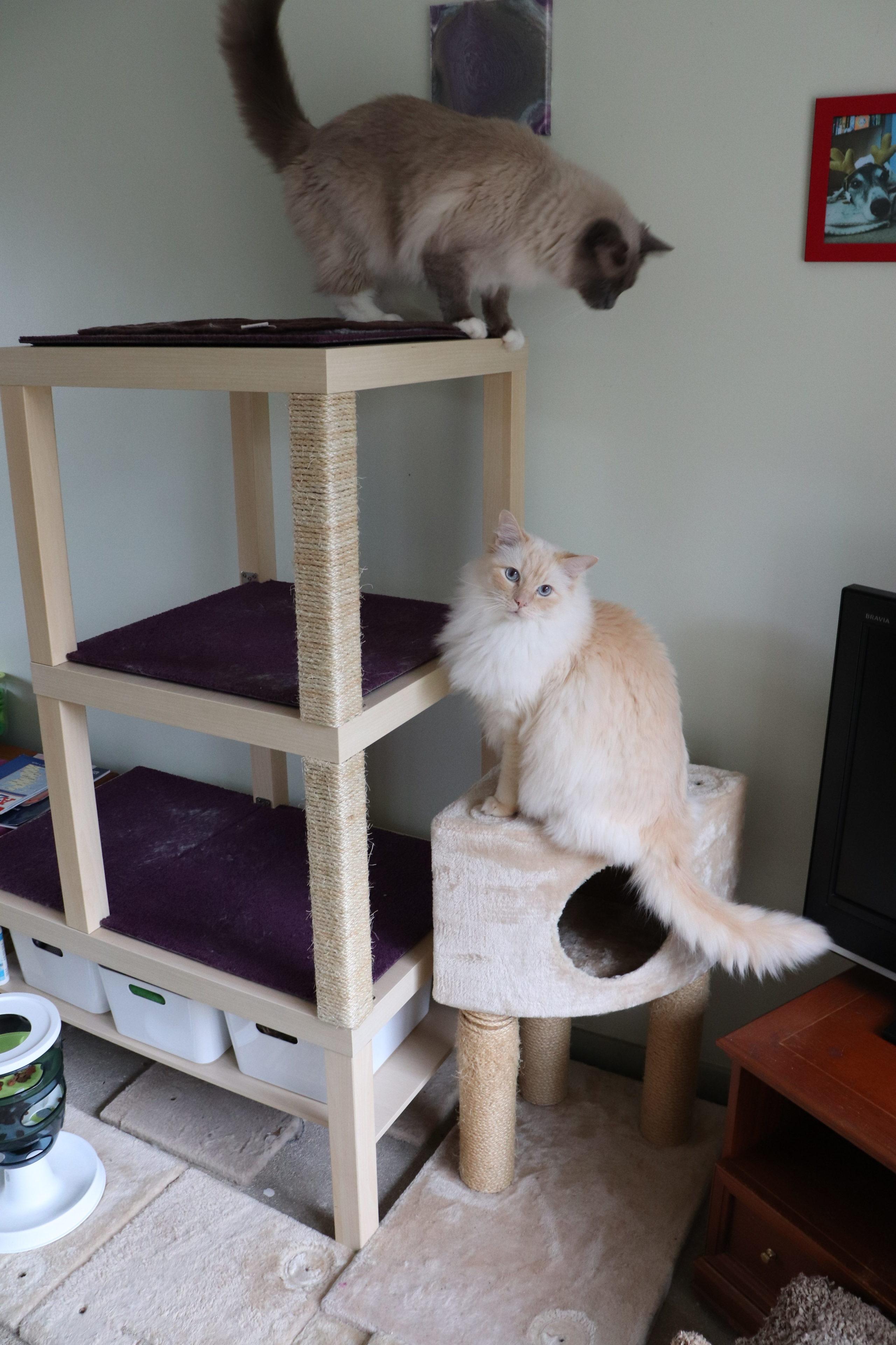 Reader Makes A Custom Diy Cat Tree