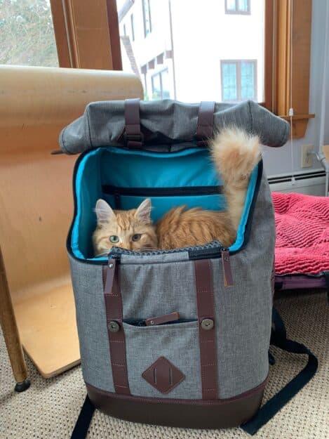 Kurgo K9 Rucksack™ - Carrier for Cats 2