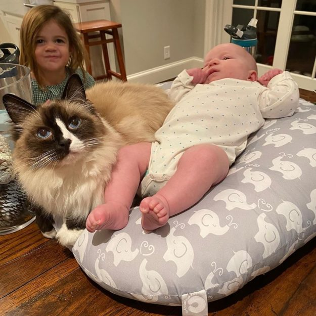Seal Mitted with a blaze Ragdoll cat Huck hanging out with his girls Molly and Hannah