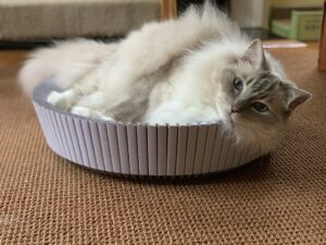 KATRIS Nest Cat Scratcher Bed Product Review IMG_4447