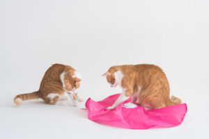 Blackhole Catch The Tail Cat Toy2