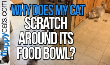 Why Does My Cat Scratch Around Its Food Bowl
