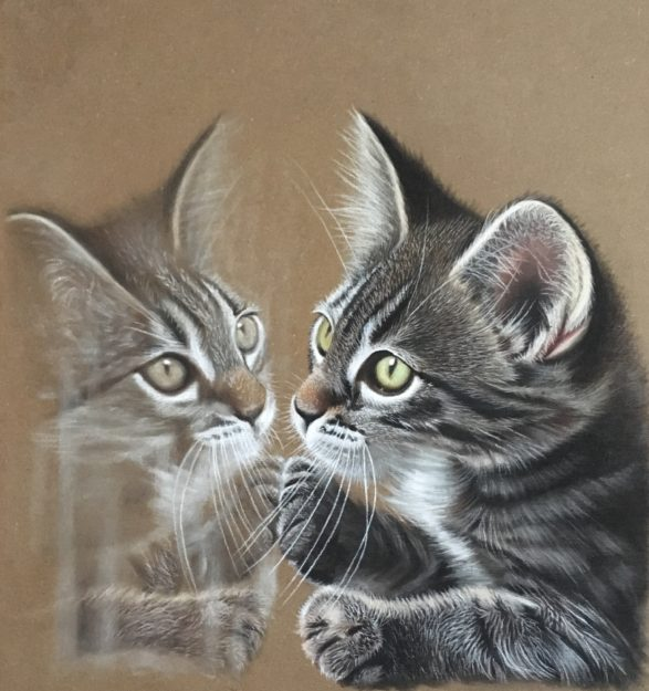 realistic cat drawing step by step