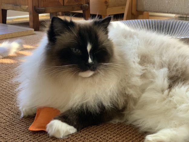 Litterbox com Hemp Cat Toys Product Review IMG_0463