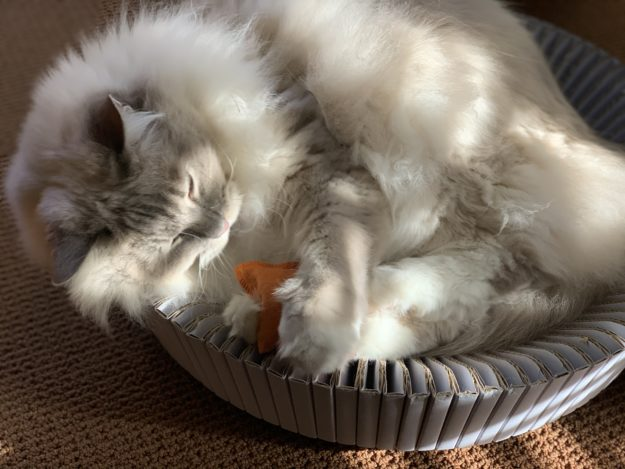 Litterbox com Hemp Cat Toys Product Review IMG_0504