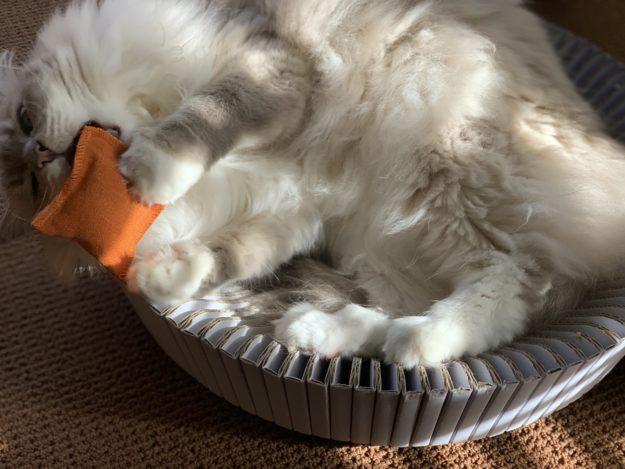 Litterbox com Hemp Cat Toys Product Review IMG_0505